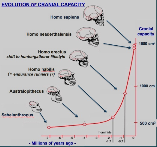 evolution_brain