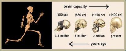 exercise_brain evolution