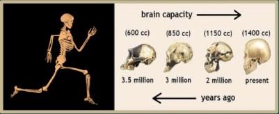 exercise_brain evolution