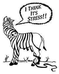 stress_zebra stripes